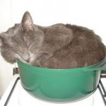 casserole-150x150