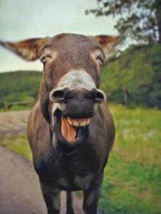 a âne1
